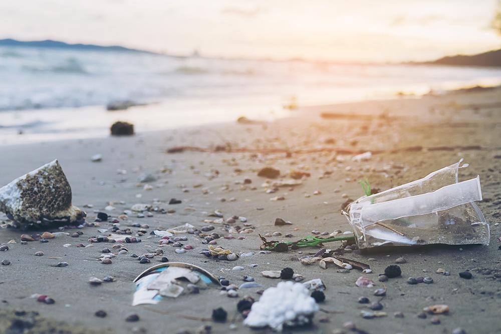 Los residuos plásticos pueden acabar siendo ingeridos por la fauna marina, lo que afecta a su salud | Foto: Freepik