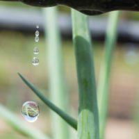 Eficiencia en el riego: emplear polímeros y sensores reduce el uso de agua y fertilizantes