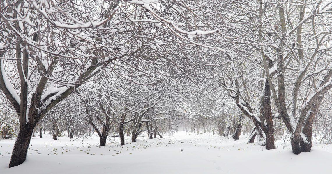 'Filomena', las lecciones climáticas de la tormenta perfecta