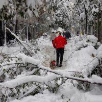 ¿Por qué se han caído tantos árboles con la nevada?