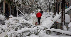 Varias personas pasean por la calle Fuencarral en Madrid, en la que numerosos árboles no han resistido el peso de la nieve, tras el paso de la borrasca Filomena | Foto: EFE / Rodrigo Jiménez