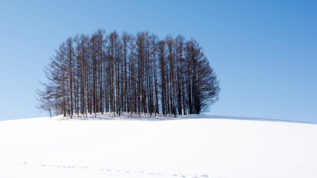 Un bosques de alerces japoneses, un tipo de conifera que pierde las acículas en invierno y que está adaptada al clima de altura.   FOTO: Tadashi Okabe
