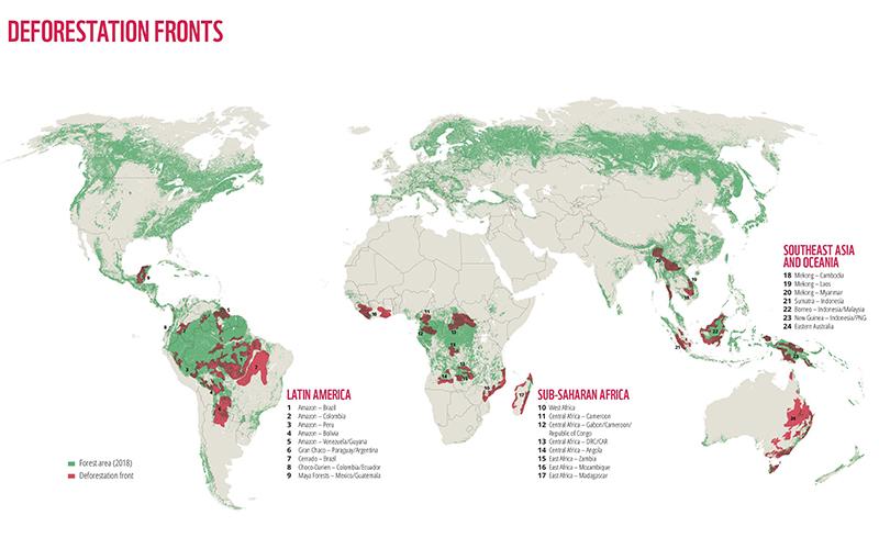 La deforestación siega una superficie equivalente a toda California, según WWF | Foto: EP / WWF