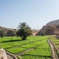 Canarias analiza el impacto ambiental del turismo, la agricultura y el ciclo del agua en el archipiélago
