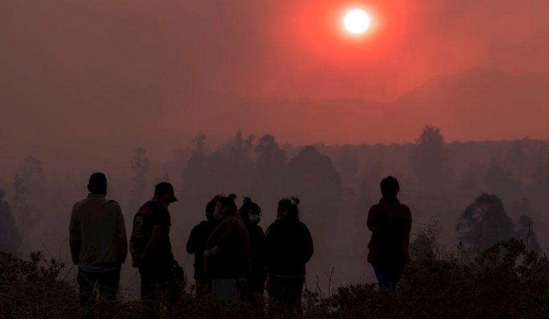 La sequía en Chile abre la puerta a plagas desconocidas