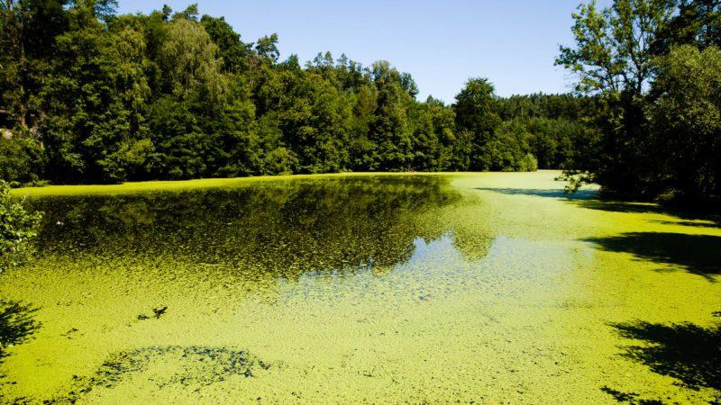 El cambio climático degrada los mayores lagos del mundo