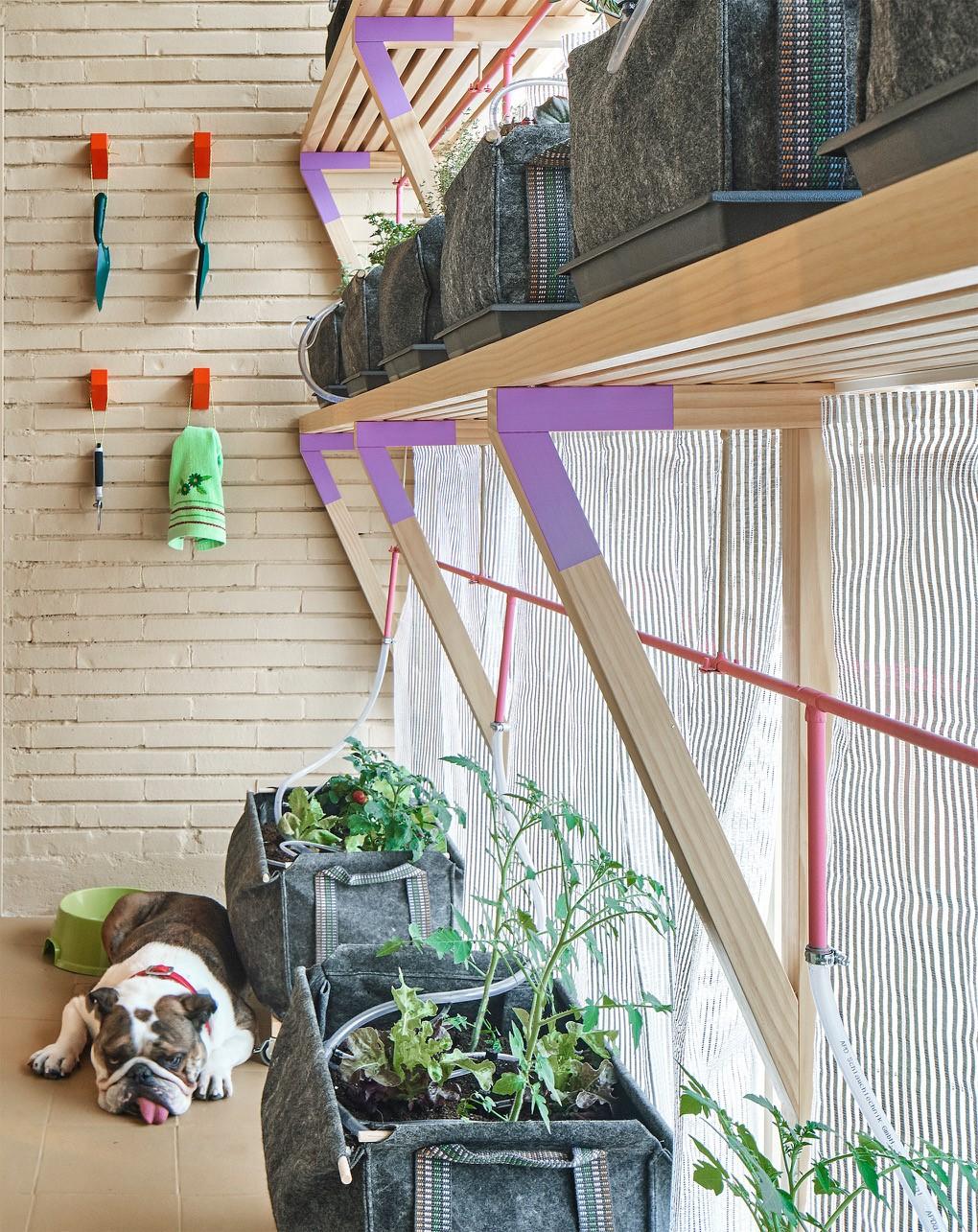 Proyecto-un-chico-un-bulldog-un-huerto-y-la-casa-que-comparten-de-huso-arquitectos-4