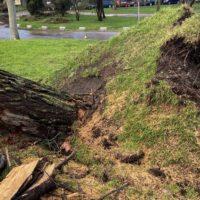 120.000 árboles afectados por Filomena no son recuperables