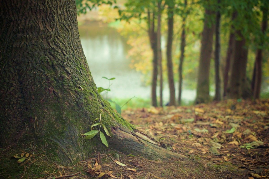 Los bosques son cada vez más vulnerables a las perturbaciones debido a los efectos directos e indirectos del cambio climático. | FOTO: Picography/Pixabay