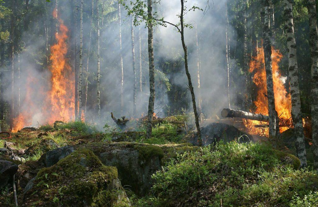 En 2019, alrededor de 400.000 hectáreas en Europa fueron arrasadas por las llamas. | FOTO: Ylvers/Pixabay