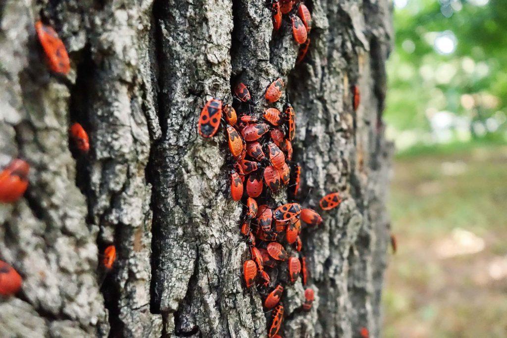 El aumento de temperaturas puede haber reducido los mecanismos de defensa de las plantas frente a los insectos. | FOTO: KRIPPSmedien/ Pixabay