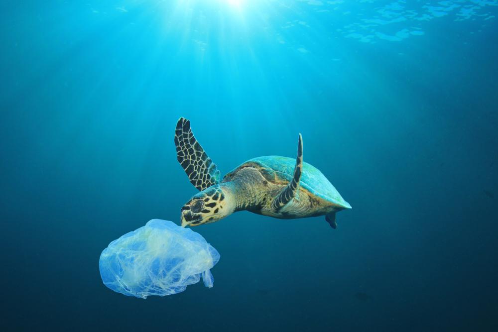 Una tortuga comiendo una bolsa de plástico. | FOTO: Rich Carey