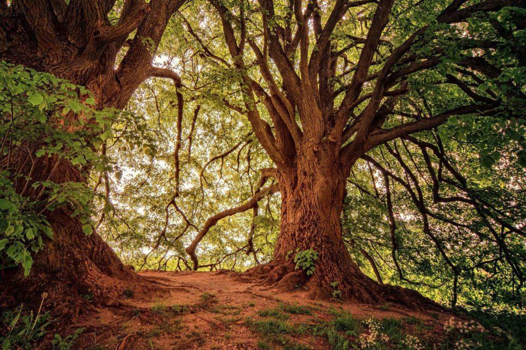Los árboles son reguladores del clima y por eso su fragilidad tiene consecuencias negativas frente a la emergencia climática.   FOTO: Jplenio/Pixabay