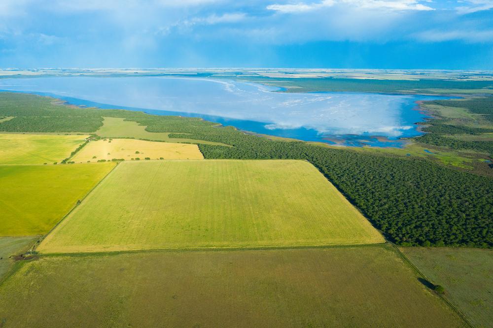 Campo de trigo listo para la cosecha en la llanuna argentina de la Pampa.   FOTO: Shutterstock
