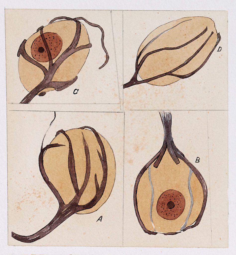 Dibujos de Ramón y Cajal reinterpretados por el artista Fernando Fueyo.   CRÉDITO: Fernando Fueyo