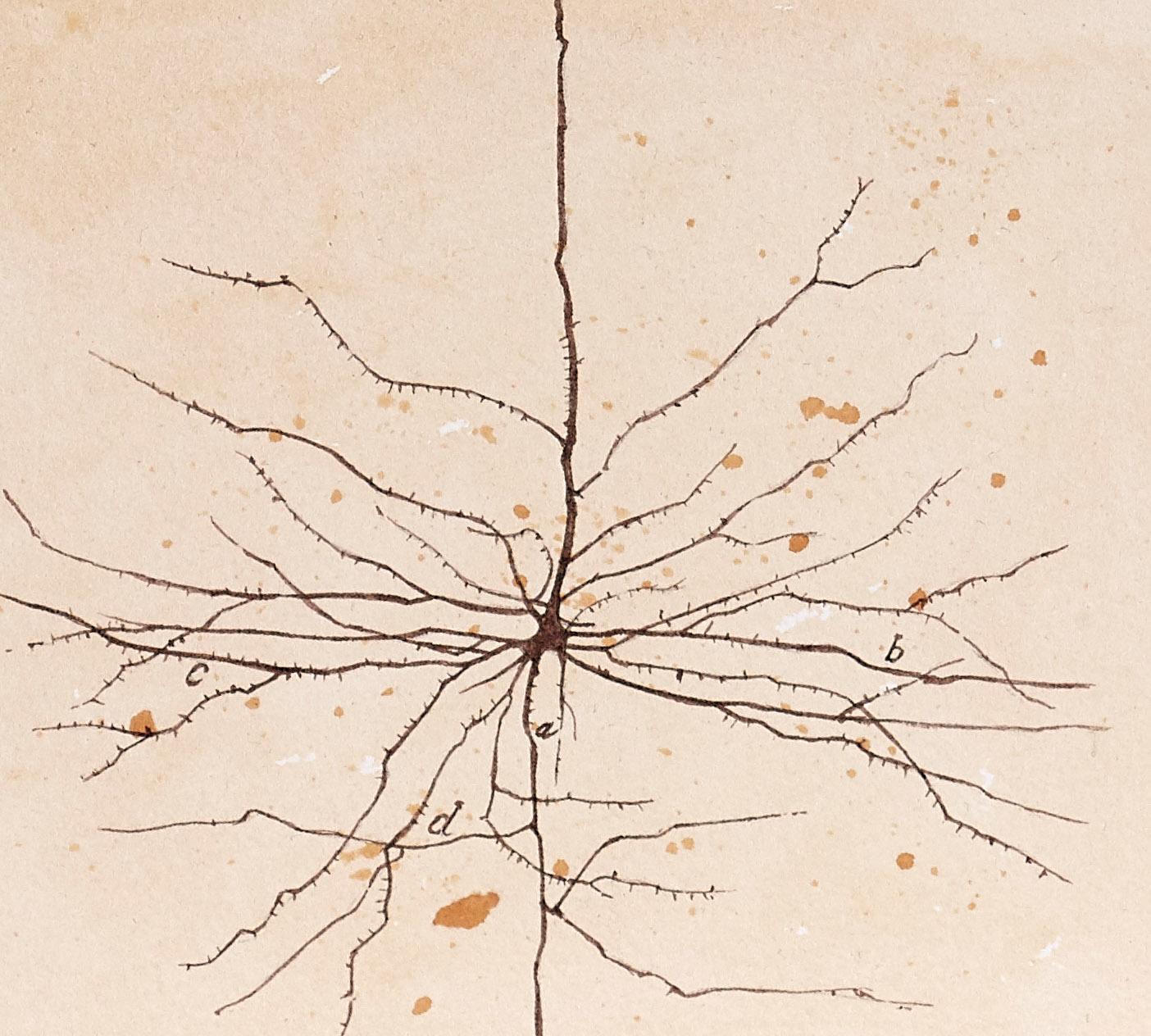 Neuronas como las que dibujó Ramón y Cajal en versión del artista fernando Fueyo.   CRÉDITO: Fernando Fueyo