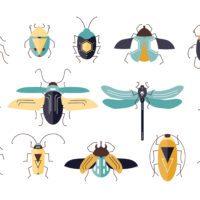 Rob Dunn: «Estamos permanentemente rodeados de insectos»