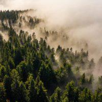 Agua de niebla para repoblar áreas desertificadas