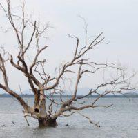 Nuevo modelo climático espera una subida del mar más rápida