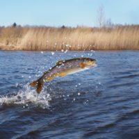 Un tercio de los peces de agua dulce, en peligro de extinción