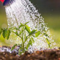 Una agricultura más sostenible, clave para salvar el agua