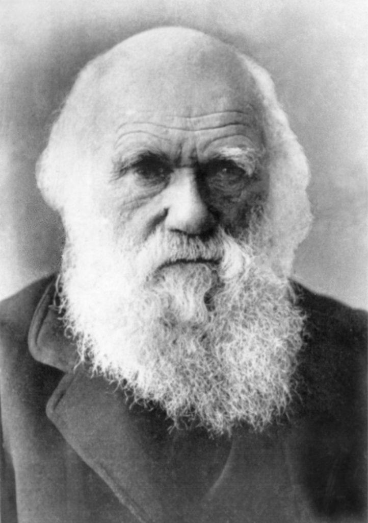 Retrato original de Charles Darwin.   FOTO Everett Collection