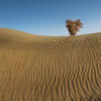 Una sequía de 640 años retrasó la consolidación de la Ruta de la Seda