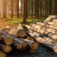 La superficie forestal certificada crece hasta los 2,43 millones de hectáreas