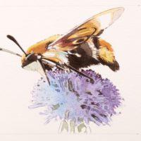 Polinizadores, días de flores y miel