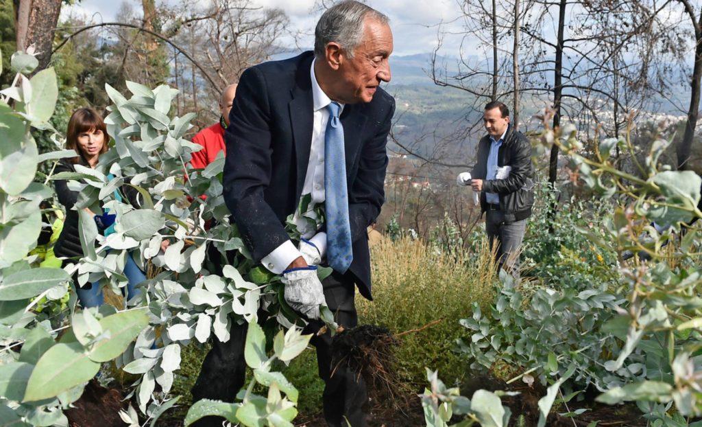 Marcelo Rebelo de Sousa, presidente de Portugal arrancando eucaliptus. | FOTO: Efe