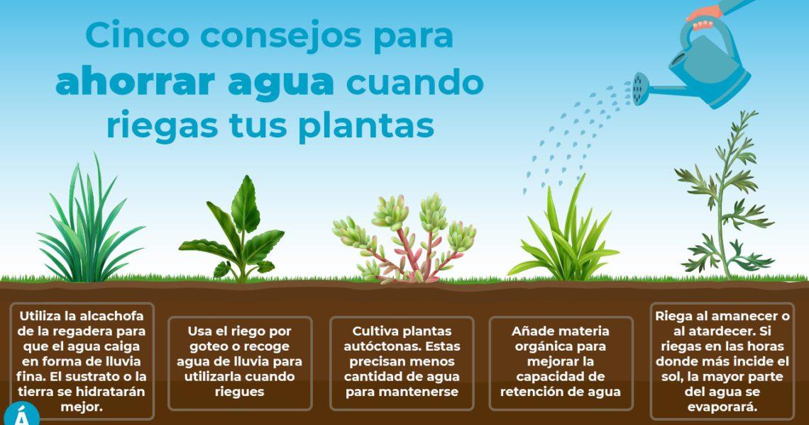 Ahorra agua mientras riegas tus plantas