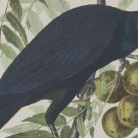 John James Audubon, un ornitólogo en el Misisipi