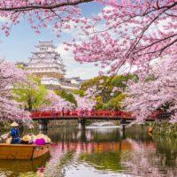 Japón vive la floración más temprana de los cerezos en 1200 años