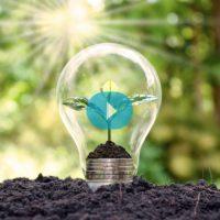 Plantas como fuente de energía sostenible