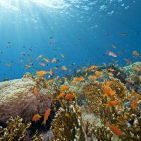 Proteger zonas oceánicas concretas para dar soluciones globales