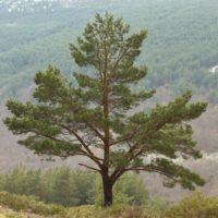 Los silvicultores celebran formar parte de la Ley de Cambio Climático