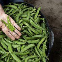 El 10% de la superficie agraria en España ya es ecológica