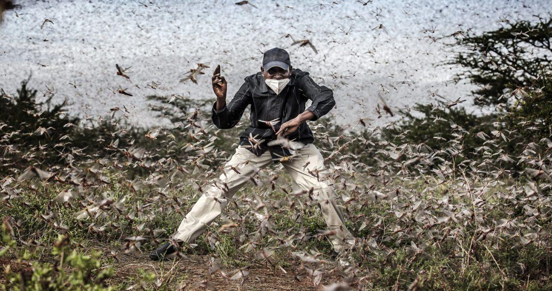 Las cinco plagas más devastadoras que afectan a los cultivos del planeta