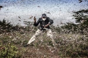 Invasión de langostas en África oriental | Foto: Luis Tato