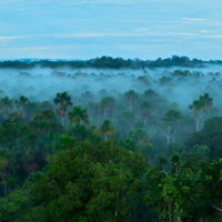 LEAF, una coalición público-privada para salvar los bosques tropicales