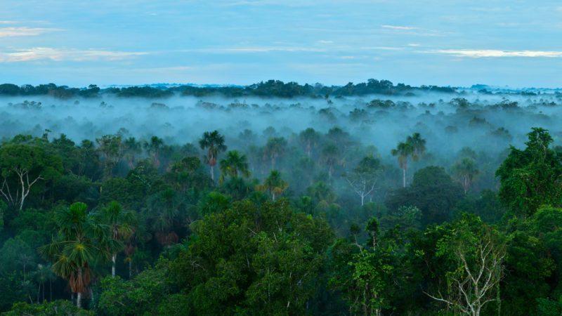 Satélites de la NASA controlarán la vulnerabilidad de los bosques tropicales