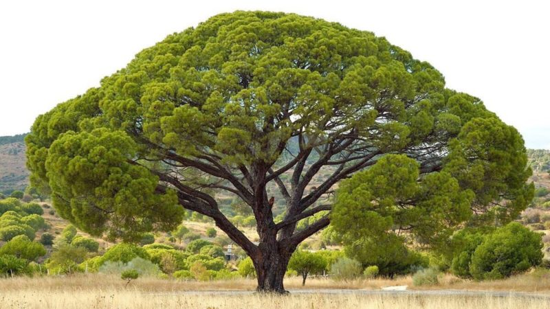 Diez árboles singulares que enriquecen nuestro patrimonio natural
