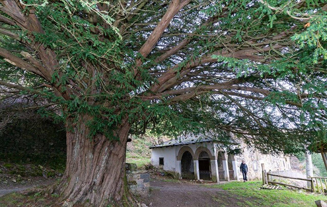 árboles singulares