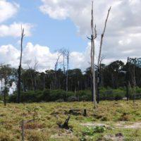 Brasil registra un récord de deforestación en el Amazonas