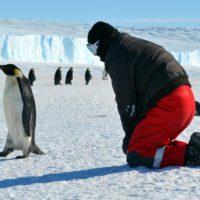 Chile acogerá en 2024 el evento más importante sobre ciencia antártica