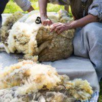 Una día para revalorizar la lana, un recurso esencial