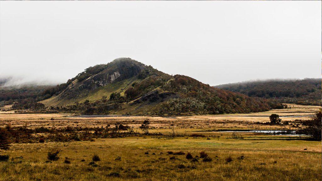 Turbera pulvinada impactada por actividad de C. canadensis ubicada en Parque Karukinka, Tierra del Fuego, Chile.
