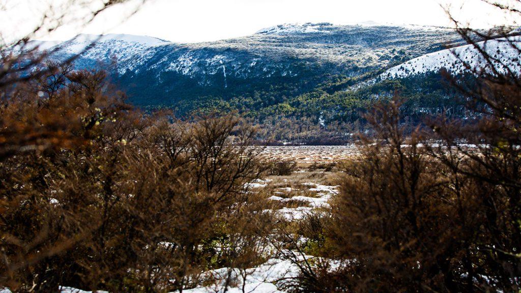 Turberas en Reserva Parrillar, Punta Arenas, Chile.