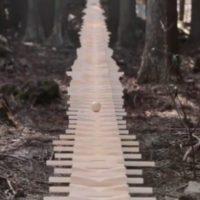 Este bosque japonés suena a Johann Sebastian Bach