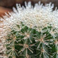 Los cactus inspiran un dispositivo para capturar agua del aire